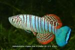 Thumbnail for fwkillifishe1568906223