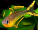 Thumbnail for fwkillifishe1571676602