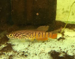 Thumbnail for fwkillifishe1571937388