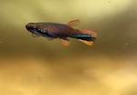 Thumbnail for fwkillifishe1571937810