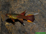 Thumbnail for fwkillifishe1572000543