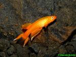 Thumbnail for fwkillifishe1572000706