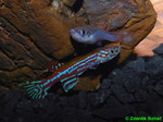 Thumbnail for fwkillifishe1572001217