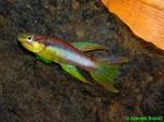 Thumbnail for fwkillifishe1572001687