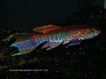 Thumbnail for fwkillifishe1572026405