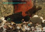 Thumbnail for fwkillifishe1572102366