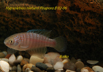 Thumbnail for fwkillifishe1572106397