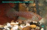 Thumbnail for fwkillifishe1572108521