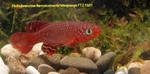 Thumbnail for fwkillifishe1572109253