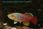 Thumbnail for fwkillifishe1572109868