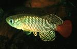 Thumbnail for fwkillifishe1572111213