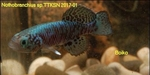 Thumbnail for fwkillifishe1572112685