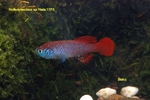 Thumbnail for fwkillifishe1572112849