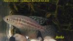 Thumbnail for fwkillifishe1572113223