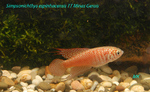 Thumbnail for fwkillifishe1572113967