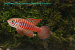 Thumbnail for fwkillifishe1572114290