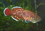 Thumbnail for fwkillifishe1572605177