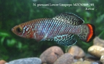 Thumbnail for fwkillifishe1572606089