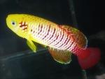Thumbnail for fwkillifishe1572606180