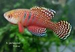Thumbnail for fwkillifishe1572606188