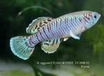 Thumbnail for fwkillifishe1572606276