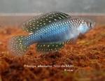 Thumbnail for fwkillifishe1572606369