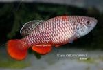 Thumbnail for fwkillifishe1572622247
