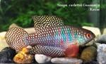 Thumbnail for fwkillifishe1572622732