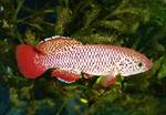 Thumbnail for fwkillifishe1572623171