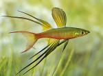 Thumbnail for fwkillifishe1573578603