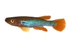 fwkillifishe&1574117401 Thumbnail
