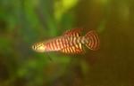 fwkillifishe&1574118605 Thumbnail