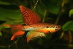 fwkillifishe&1574182813 Thumbnail