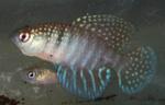 fwkillifishe&1574204690 Thumbnail