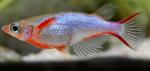 fwkillifishe&1574232019 Thumbnail