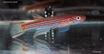fwkillifishe&1596517505 Thumbnail