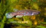 fwkillifishe&1596517702 Thumbnail