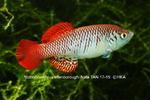 fwkillifishe&1596639065 Thumbnail