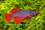fwkillifishe&1596639271 Thumbnail
