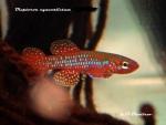 fwkillifishe&1596864025 Thumbnail