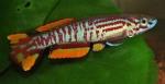 fwkillifishe&1596864148 Thumbnail
