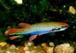 fwkillifishe&1596864486 Thumbnail