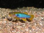 Thumbnail for fwkillifishe1611406558