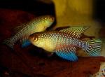 Thumbnail for fwkillifishe1611411002