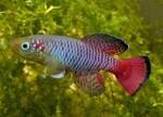Thumbnail for fwkillifishe1611417603