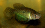 Thumbnail for fwkillifishe1611424809
