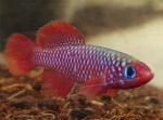 Thumbnail for fwkillifishe1611424811