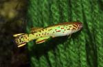 fwkillifishe&1611740414 Thumbnail