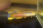 fwkillifishe&1611751210 Thumbnail