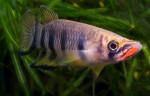 fwkillifishe&1611786602 Thumbnail